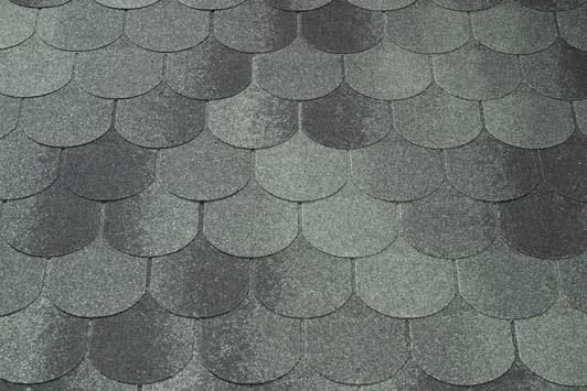 Bobrovka siva