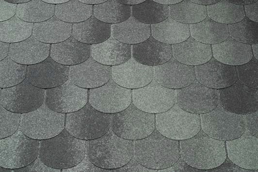 Bobrovka siva - asfaltovy sindel